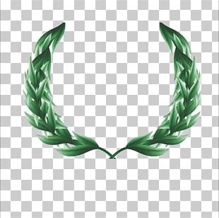 Ancient Greece Olive Branch Google S PNG