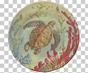 Box Turtles Sea Life Centres Tortoise Plate PNG