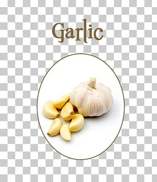 Garlic Presses Food Eating Allicin PNG