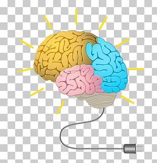 Human Brain Neurofeedback Cognitive Training Memory PNG