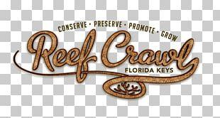 Key Largo Florida Keys Reef Water Snorkeling PNG