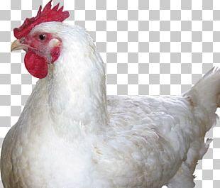 Chicken Curry Chicken Nugget Chicken As Food PNG
