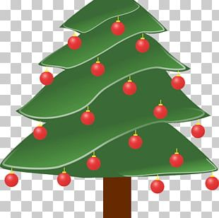 Pine Evergreen Tree PNG