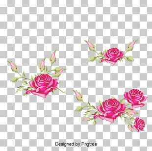 Garden Roses Cabbage Rose Floral Design Cut Flowers PNG