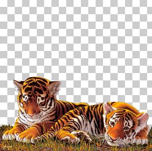 Tiger Work Of Art Painting Cat PNG