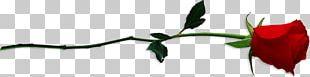 Cut Flowers Rose Plant Stem Petal PNG