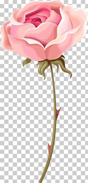 Garden Roses Beach Rose Centifolia Roses Pink PNG