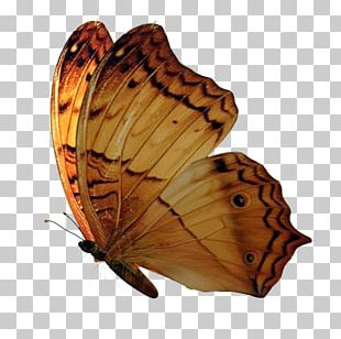 Brush-footed Butterflies Butterfly PNG