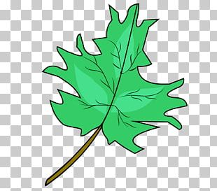 Maple Leaf Drawing PNG