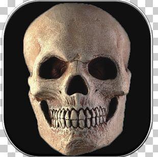 Skull Computer Icons Symbol RocketDock PNG