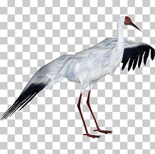 Zoo Tycoon 2: African Adventure Crane Bird White Stork PNG