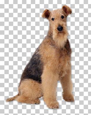 Airedale Terrier Bedlington Terrier Samoyed Dog Akita Welsh Terrier PNG