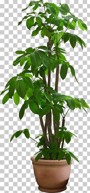 Houseplant Plants Shrub Garden Ideas Tree PNG