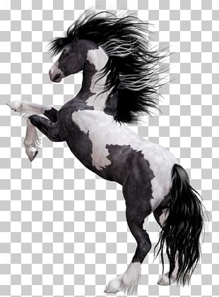 Arabian Horse Appaloosa Mustang American Paint Horse Stallion PNG