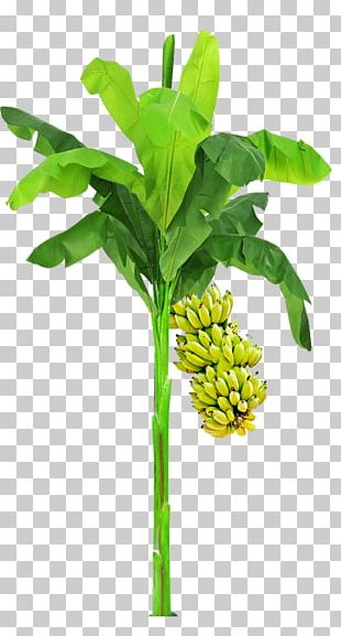 Leaf Plant Stem Flowerpot Tree PNG