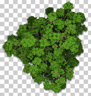Lacinato Kale Sweet Chestnut Leaf Vegetable Plant PNG