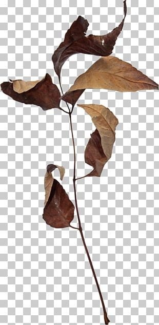 Autumn Leaves Leaf 2403 (عدد) PNG