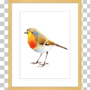 European Robin Bird Watercolor Painting Drawing PNG