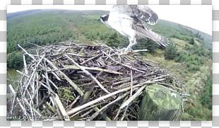 Bird Of Prey Bird Nest Ecosystem Fauna PNG