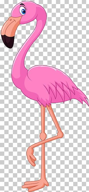 Cartoon Flamingo Bird Illustration PNG