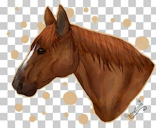 American Quarter Horse Stallion Pony Horse Head Mask Animation PNG