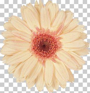 Cut Flowers Purple Floral Design Photography PNG