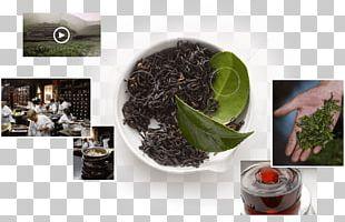 Oolong Kombucha Black Tea Da Hong Pao PNG
