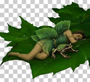 Tooth Fairy Elf Fairy Tale Spirit PNG