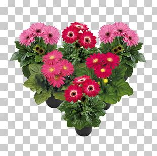 Cut Flowers Flower Bouquet Transvaal Daisy Floral Design PNG
