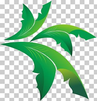 Leaf Olive Euclidean PNG