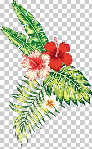 Tropics Tropical Climate Flower PNG