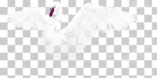 Feather Water Bird White Beak PNG