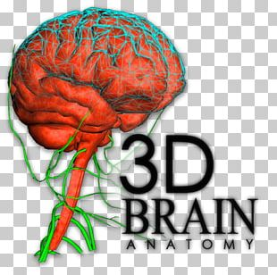 Brain Human Behavior Organism Font PNG