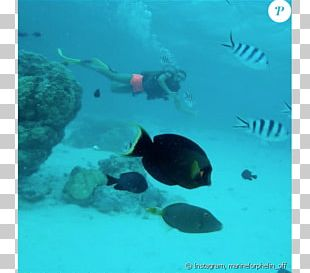 Snorkeling Coral Reef Fish Underwater Sea PNG