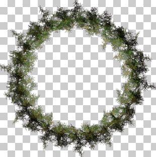 Garland Spruce Christmas Santa Claus Fiddle-leaf Fig PNG