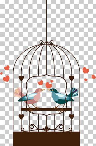Birdcage Rosy-faced Lovebird PNG
