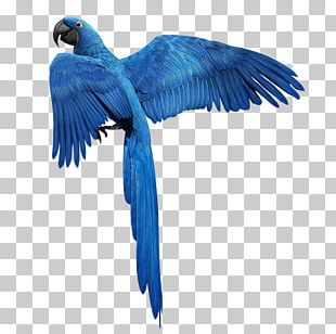 Bird Parrot Feather Golden Parakeet PNG