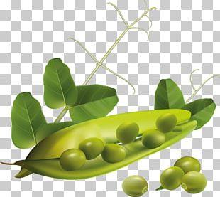 Vegetarian Cuisine Vegetable Pea PNG