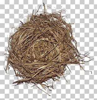 Weed Bird Edible Birds Nest PNG