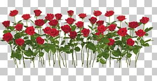 Rose Flower Shrub PNG