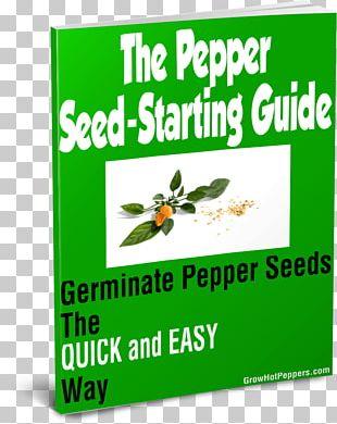 Jalapeño Chili Pepper Fatalii Seed Fennel PNG