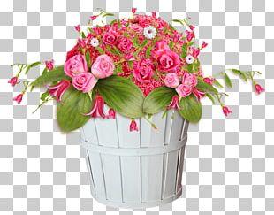Transvaal Daisy Flower Vase Life Garden Roses PNG