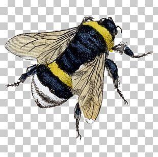 Bumblebee Honey Bee Beekeeping PNG