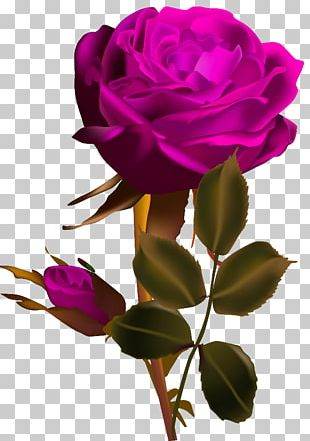 Rose Flower Red Desktop PNG