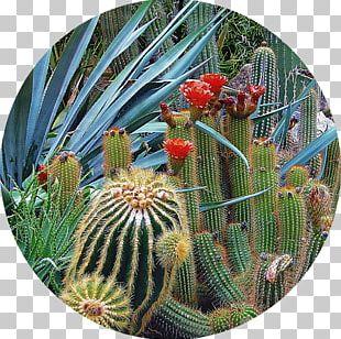 Tucson Botanical Gardens Desert Botanical Garden Westin La Paloma Resort & Spa PNG