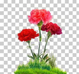 Carnation Cut Flowers Floral Design Flower Bouquet PNG