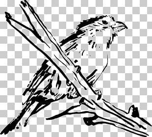 Bird Beak Feather Wing PNG