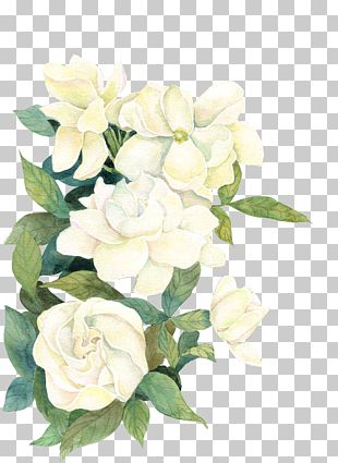 Flower If(we) PNG