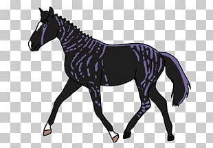 Horse Mare Shutterstock Stallion Graphics PNG