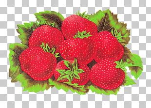 Strawberry Label Shortcake Accessory Fruit Food PNG